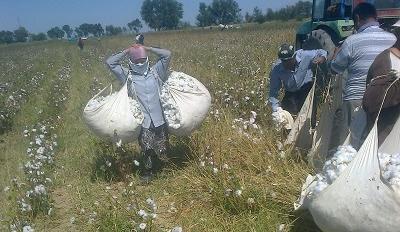 Forced labor in Uzbekistan